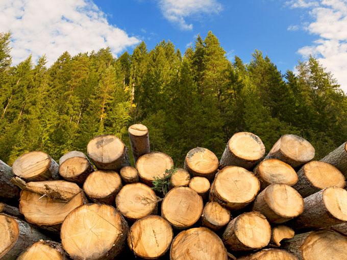 Coco Malou: Nachhaltige Unterwäsche aus Holz