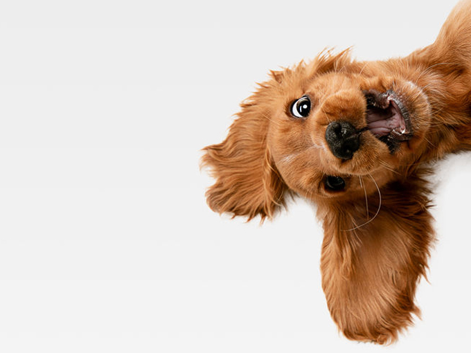 Kuschelweiche Pullis aus Hundehaaren