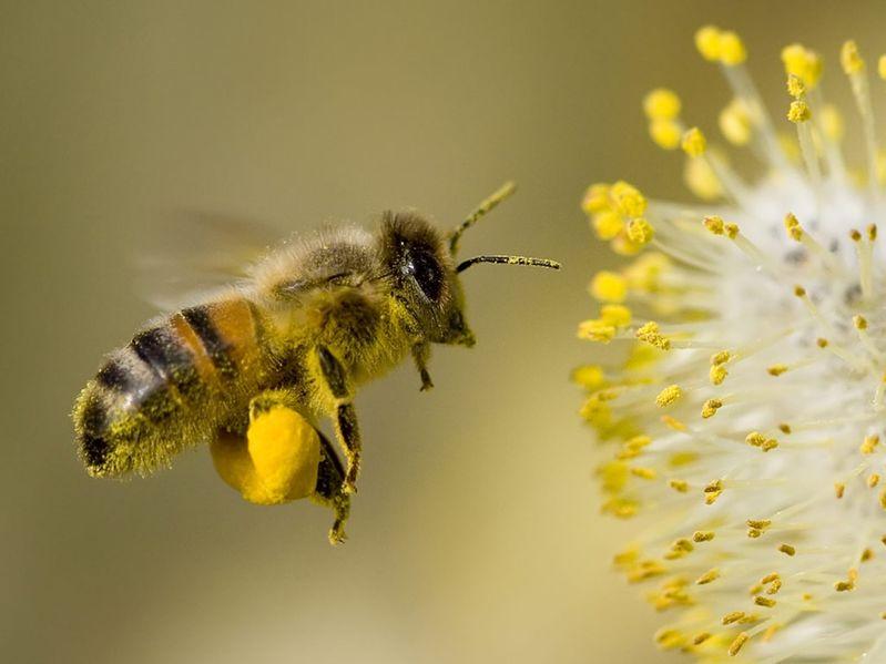 AgroBee entwickelt App zu Bienenvermittlung