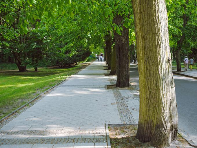 PLANTObelly schenkt Straßenbäumen mehr Aufmerksamkeit