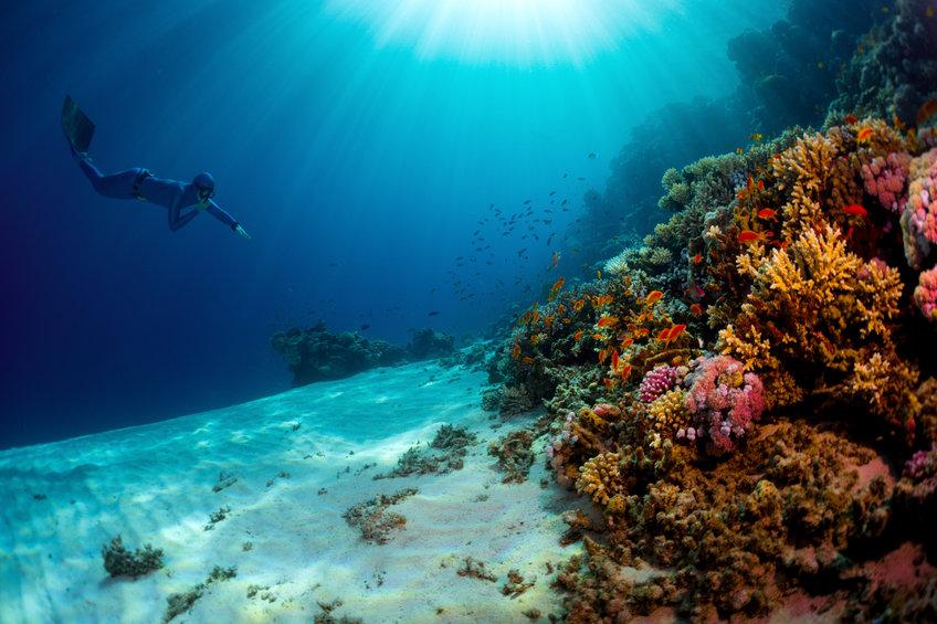SeaClear – der Meeresmüllsammler